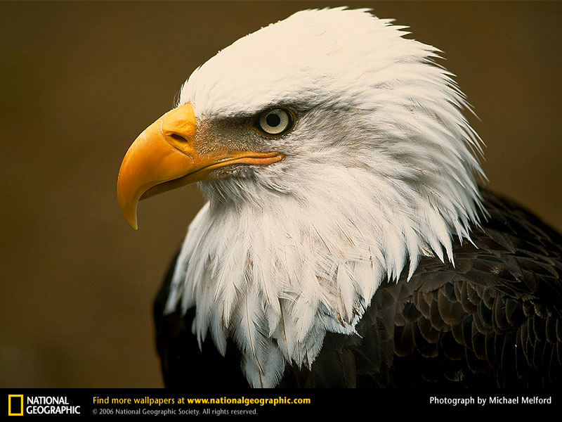 bald-eagle-head.jpg