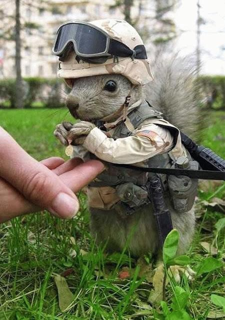 Combat squirrel.jpg